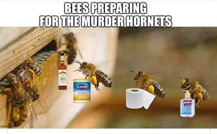 bees preparing.jpg