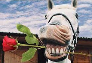 rosehorse.jpg.d2b3be5e26ee098d25b9919d53e88159.jpg