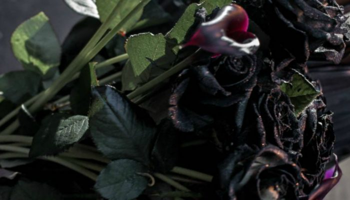 Black Halfeti roses in rain