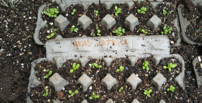 Egg Carton Garden Craft Project