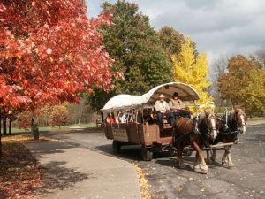 A Horse Drawn Wagon goes through Nauvoo