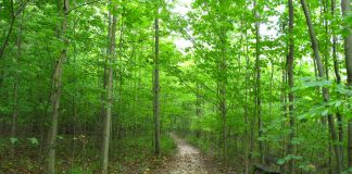 Walking trail in the Sacred Grove