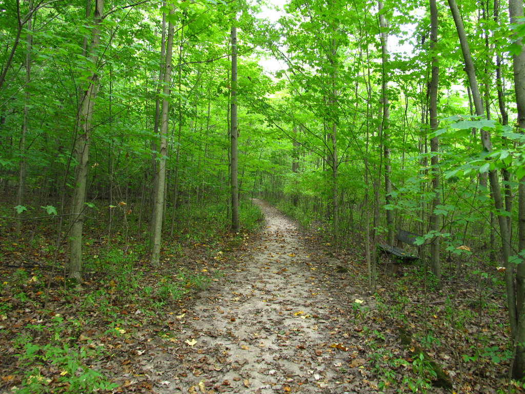 Walking trail in the Sacred Grove