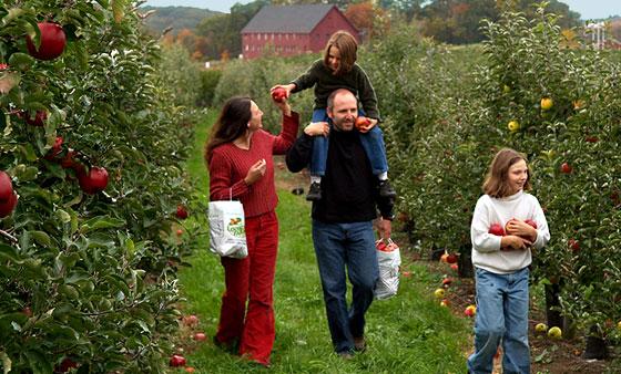 PL-apple-picking
