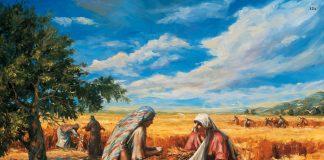 Gospel Doctrine Lesson 19:ruth gleaning the fields