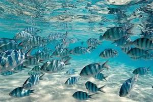 reef_fish-cook_islands-04516