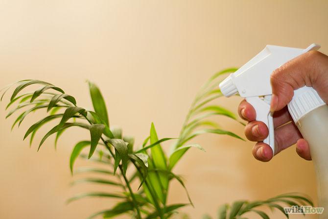 spraying houseplants