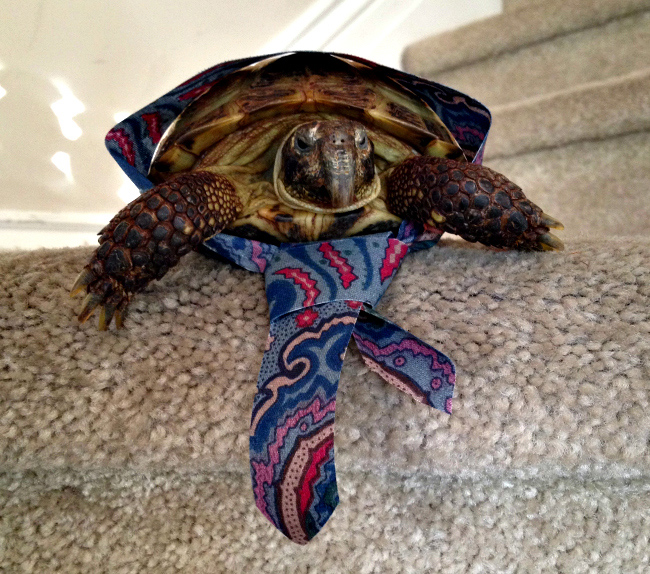 Turtle dressed as Mormon missionary
