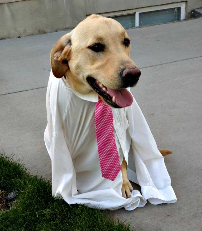 Pet dressed as Mormon missionary