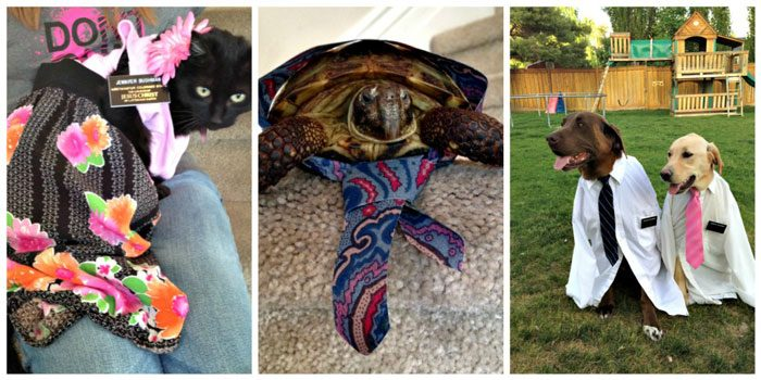 Pets dressed as missionaries