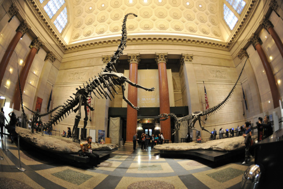 National Museum with Dinosaur bones, from timeout.com