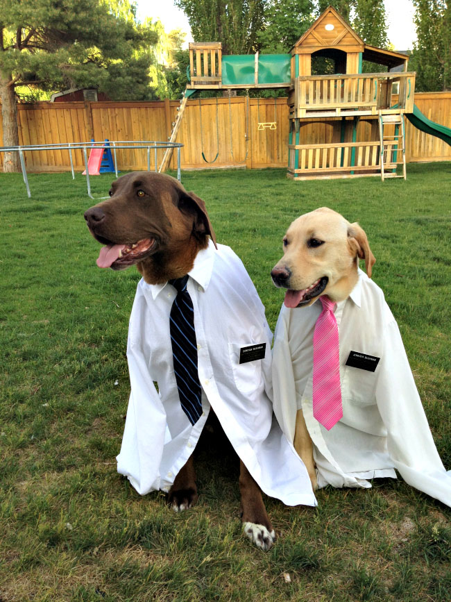 Pets dressed as missionaries