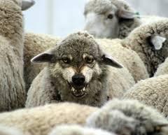 World Sheep