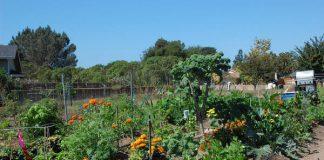 LDS Garden