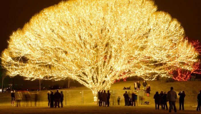 Draper City Tree of Life