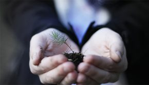 Holding a seedling