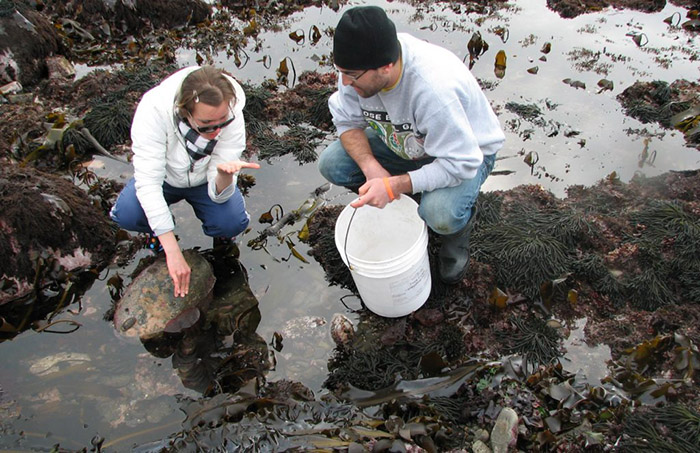 Two marine biologists investigating a tide pool