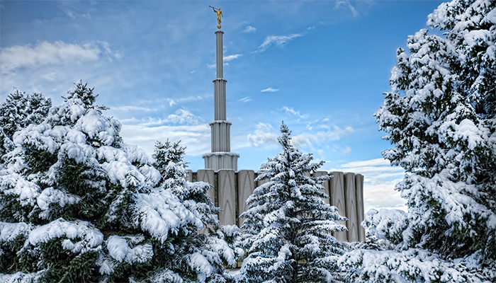 Snowy trees near the Provo temple