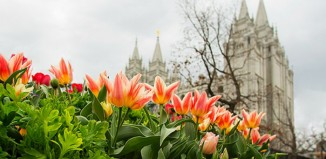 SLC temple, flowers