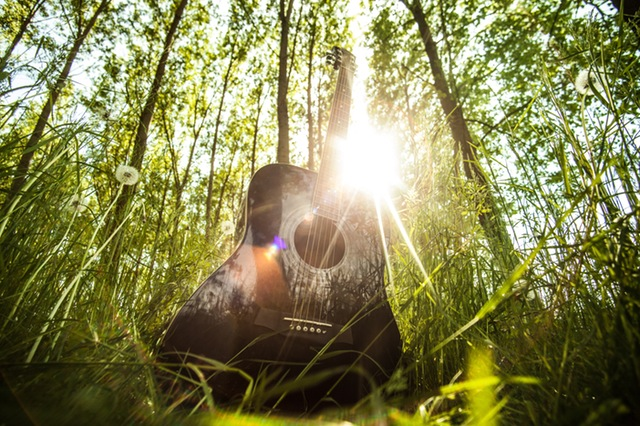 A guitar in a grove of trees on a sunny day