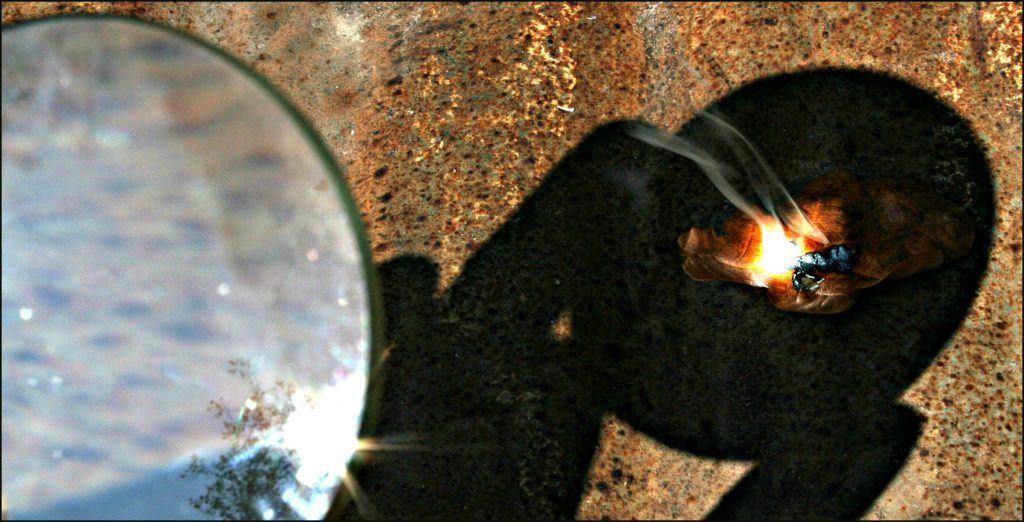 ant under a magnifying glass