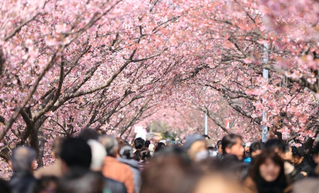 crowd of people under pretty trees