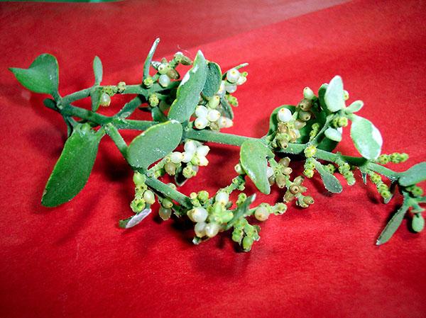 Symbolic Christmas Mistletoe