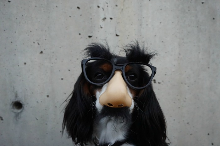 childlike dog with a fake nose and glasses