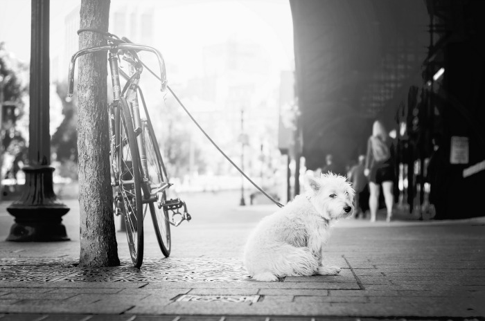 humble dog tied to a bike