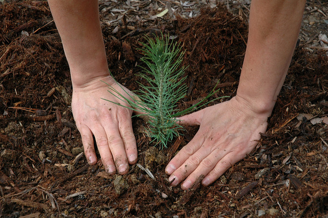 plant a tree for love a tree day
