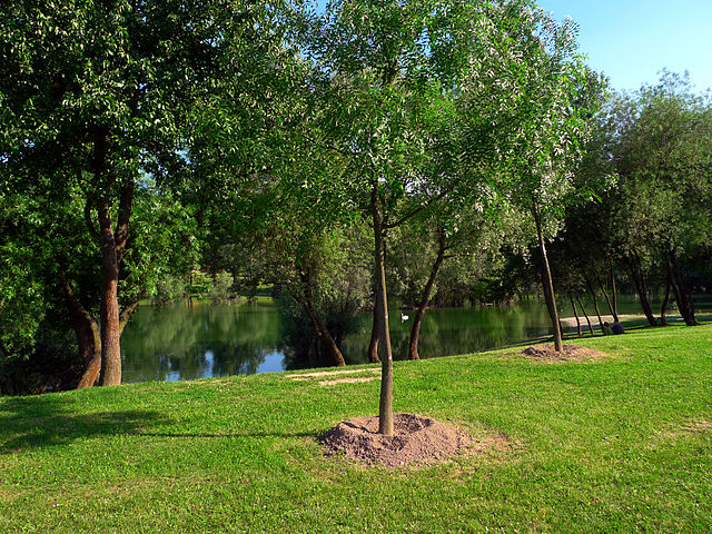 adopt a tree on love a tree day