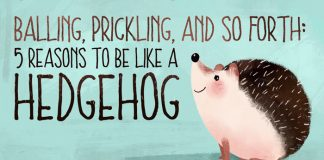 be like a hedgehog