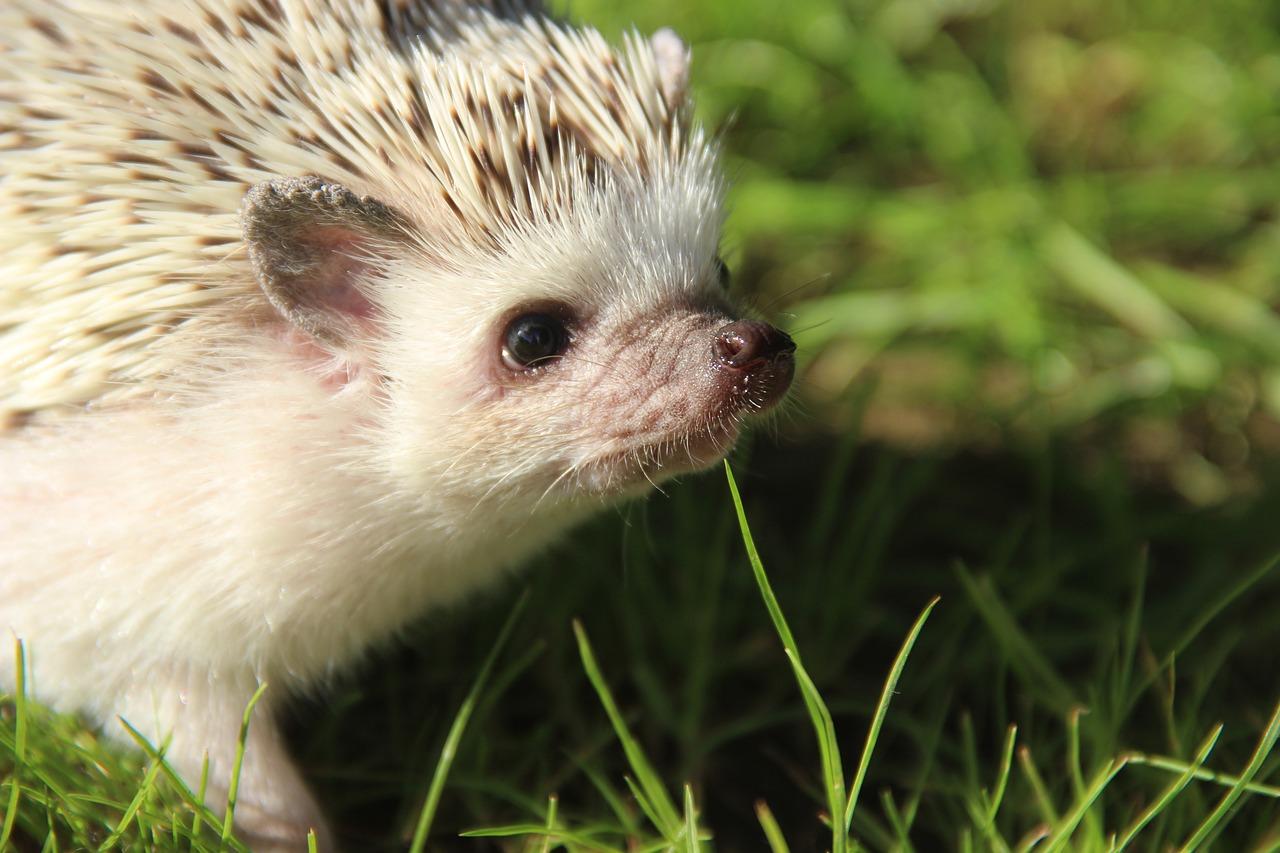 patient hegehog