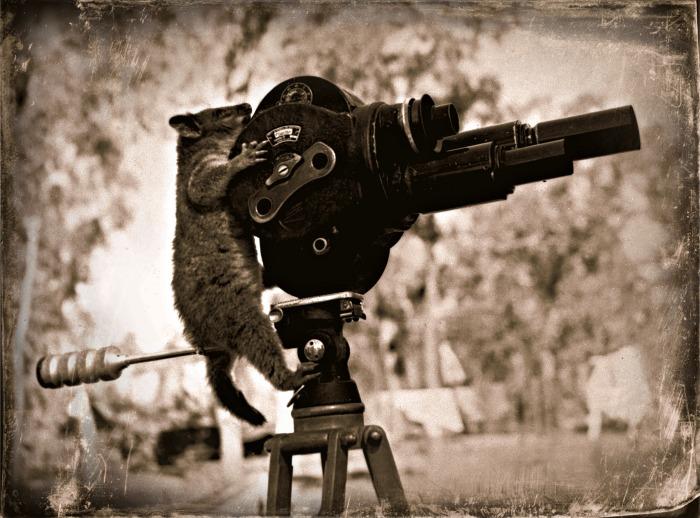 Possum using a Camera