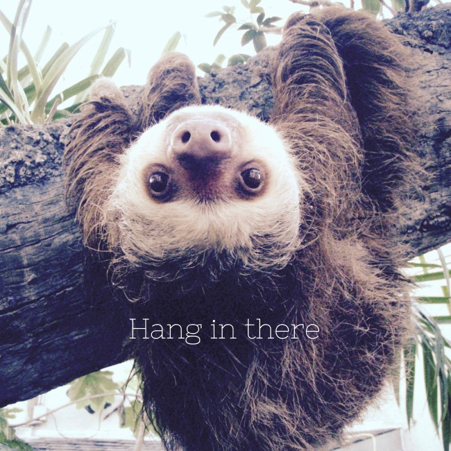 sloth hang in there