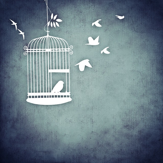 birds set free from a cage