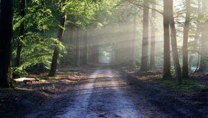 path in the sun