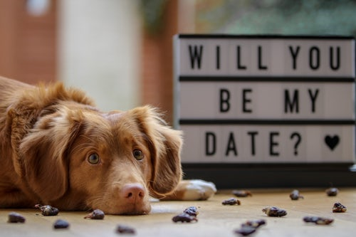 Will you be my date? sign with dog in the foreground