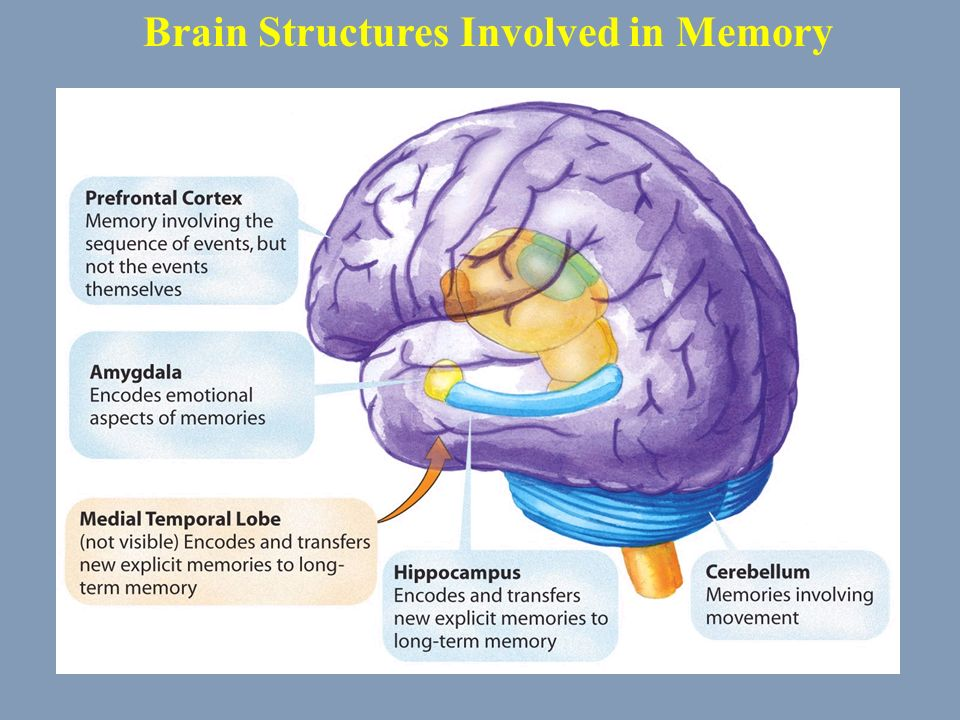 Brain Memory Diagram