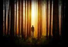 Man walking in dark woods towards light.