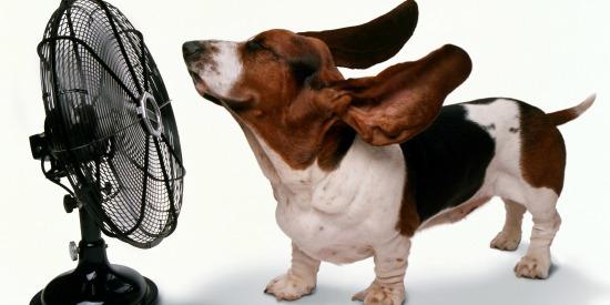 dog fan