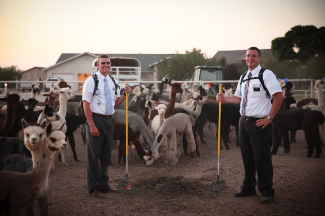 Missionaries with llamas.
