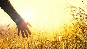 outstretched hand sunlight autumn Mormon