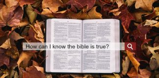 An internet search bar overlapping a Bible resting on colorful leaves.