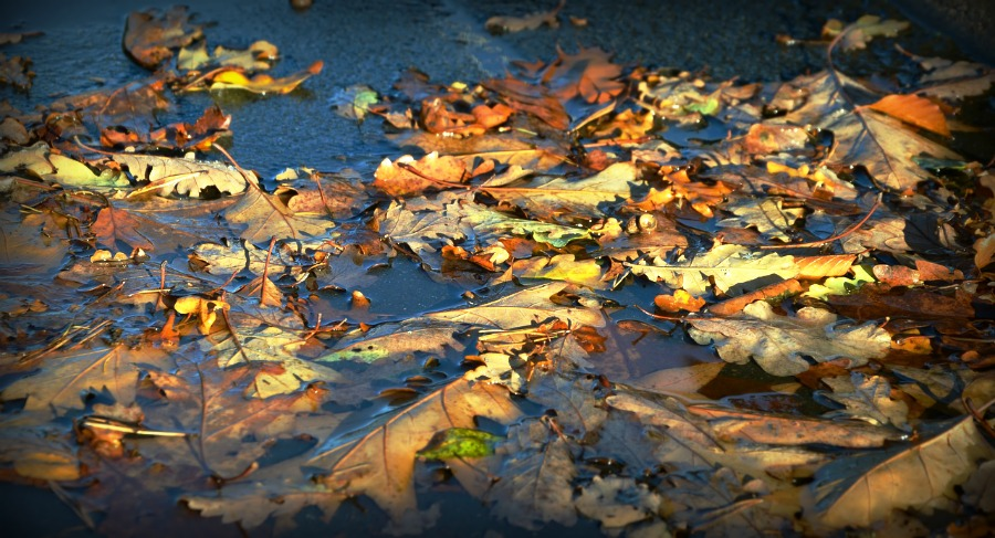 Leaves in a puddle of water.