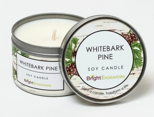 Bright Endeavors Whitebark Pine candle