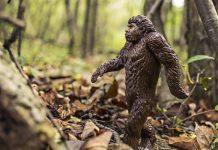 bigfoot rumors urban legends