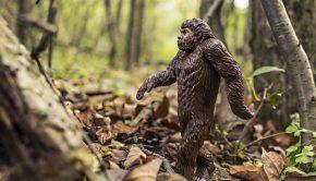 bigfoot rumors urban legends
