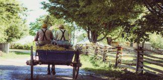 Amish men on waggon