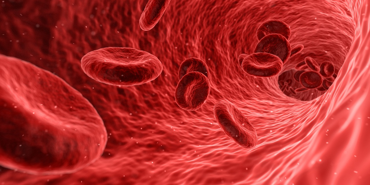 blood cells health body